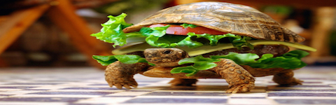 Turtle - Blog