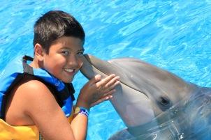 Dolphin Swim00001