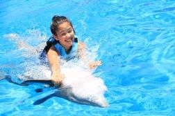 Dolphin Swim00028