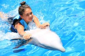 Dolphin Swim00037