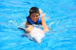 Dolphin Swim00046