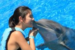 Dolphin Swim00077