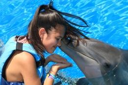 Dolphin Swim00095